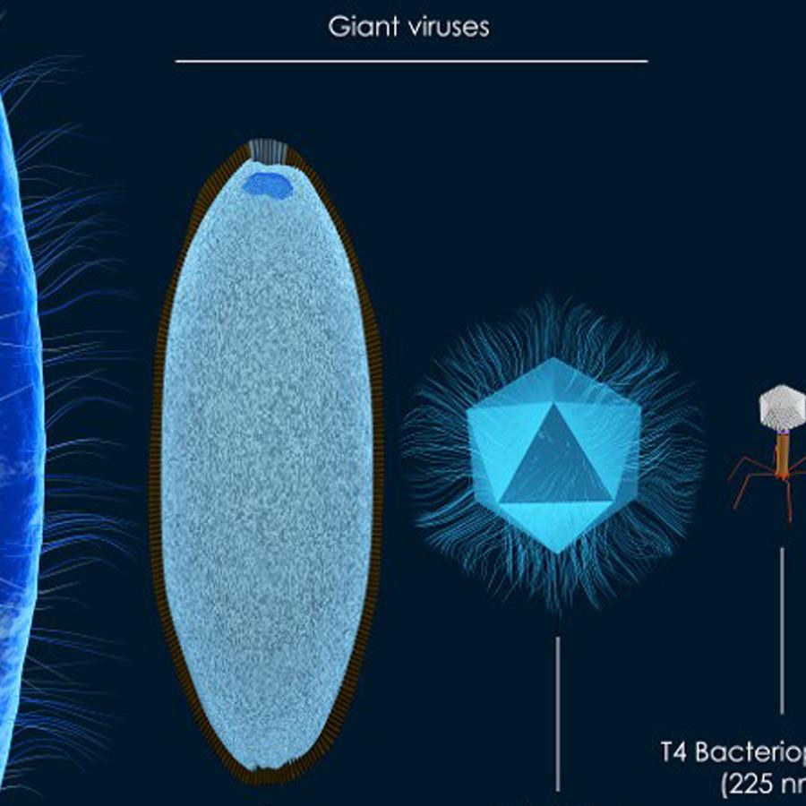 Virus gigantes en profundidades de la Tierra