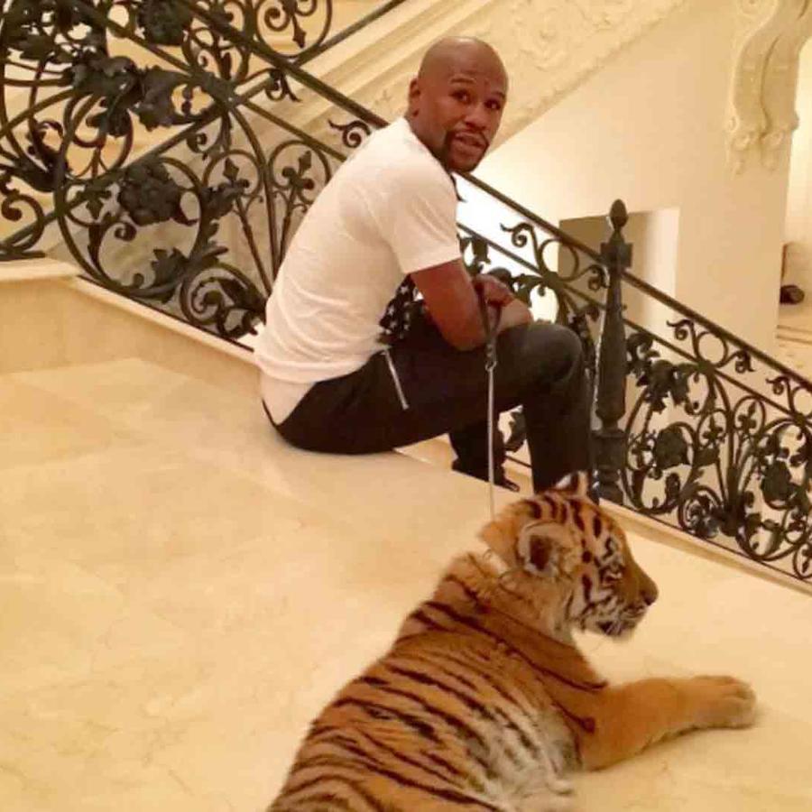Floyd Mayweather con un tigre