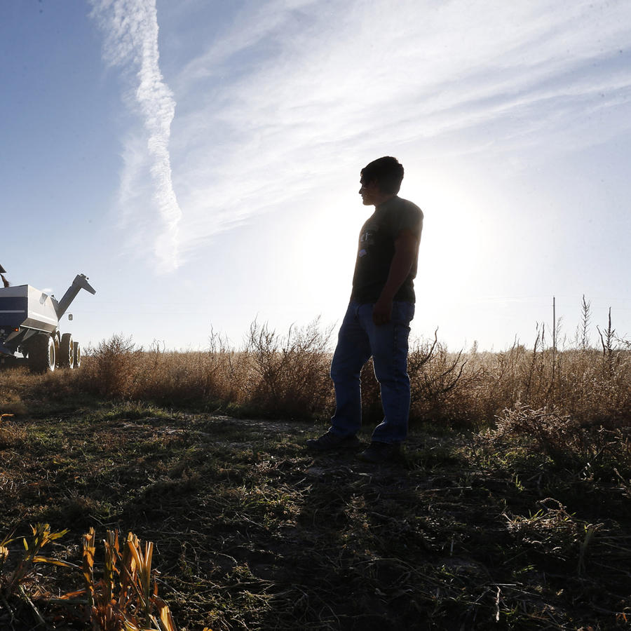 Un agricultor hispano trabaja en una plantación en EEUU
