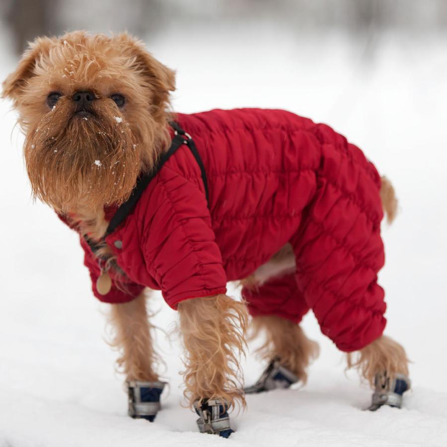 perro con ropa color roja en la nieve
