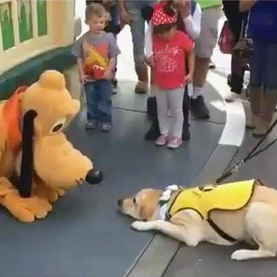 perro guia conoce a pluto