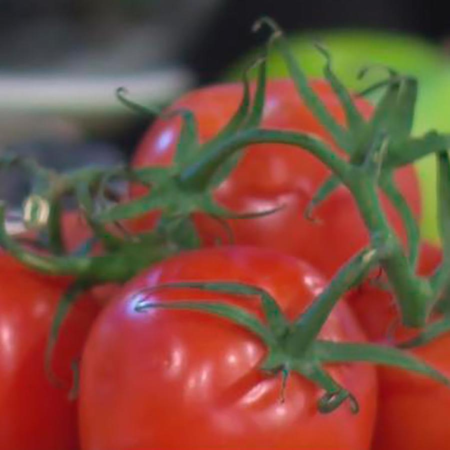 Te contamos cuáles son los alimentos que rejuvenecen y te protegen de enfermedades