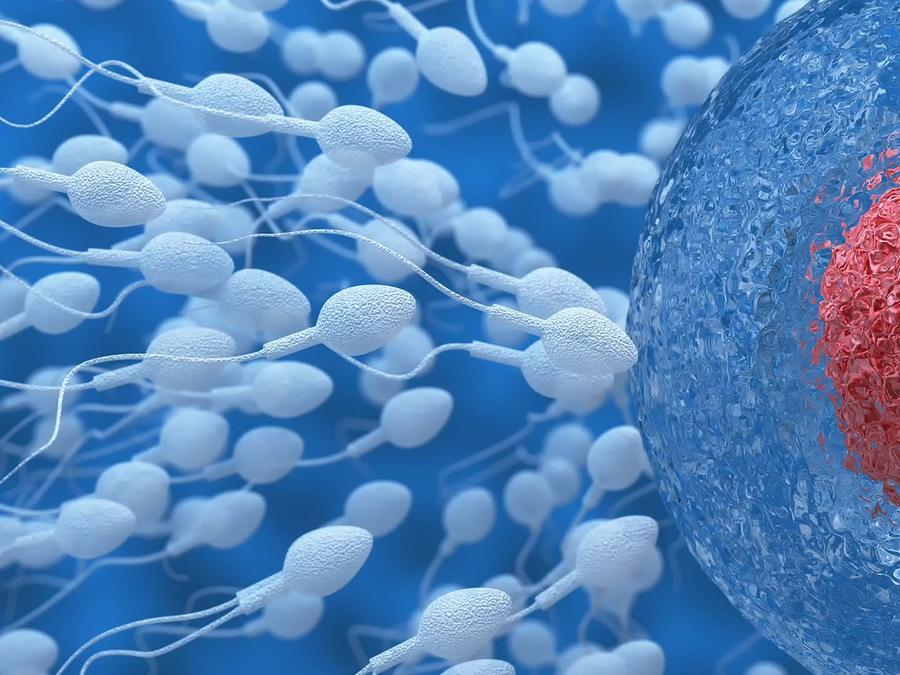 Espermatozoides y óvulos