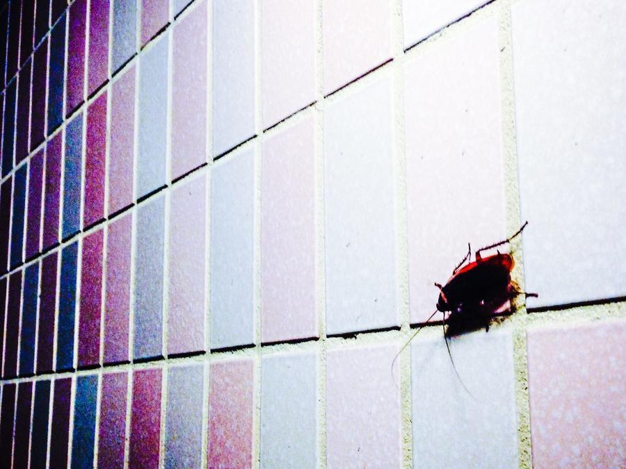Cucaracha sobre pared
