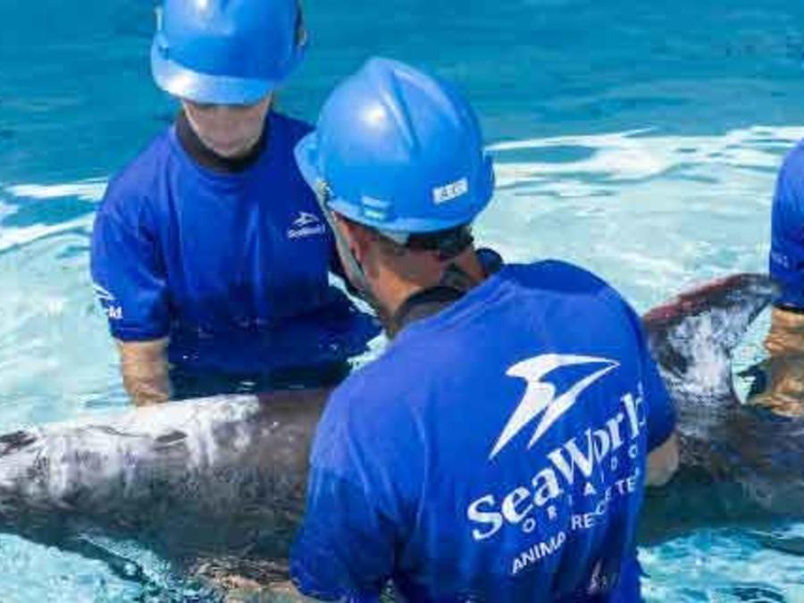 ballena varada en costa oeste florida