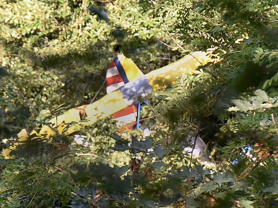 avion ultraligero en un arbol