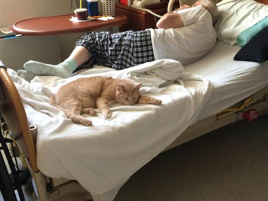 El gato Tom en el hospital de veteranos de Salem