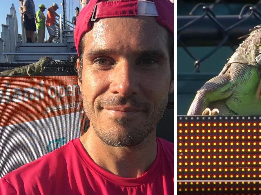 Una iguana se robó toda la atención en un encuentro de tenis