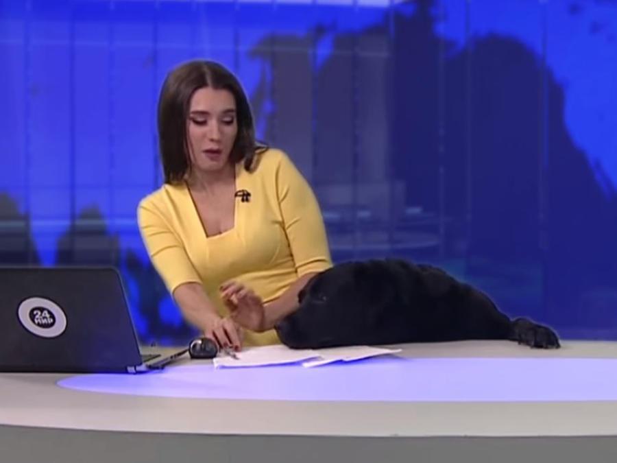 Presentadora interrumpida por un perro