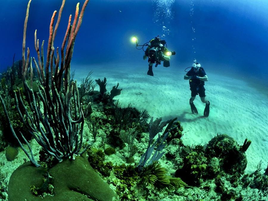 Arrecife marino foto submarina