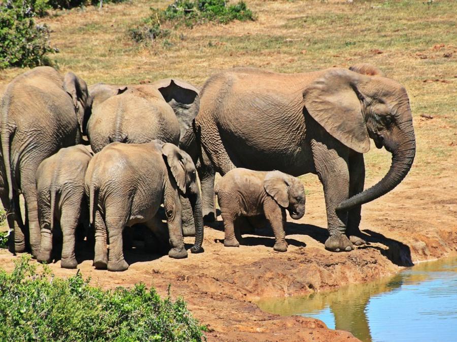 Elefantes en el agua