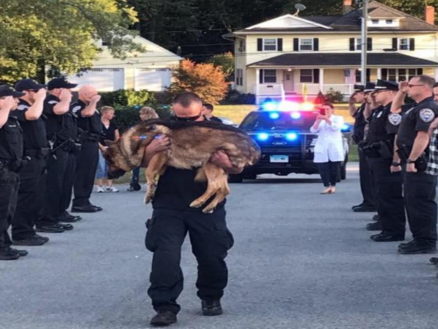El departamento de policía de Middletown y algunos residentes de la ciudad realizaron un tributo a Hunter justo antes de que su leal compañero, el oficial D'Aresta lo pusiera a dormir.