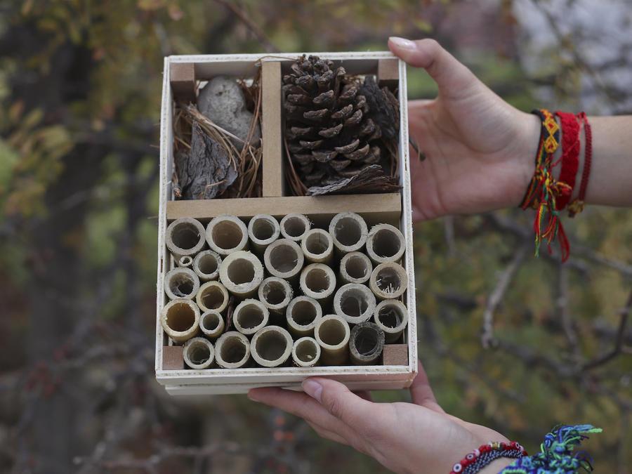 """Un """"hotel"""" para abejas elaborado por estudiantes, en Guadalajara, Jalisco, el 27 de febrero del 2018."""