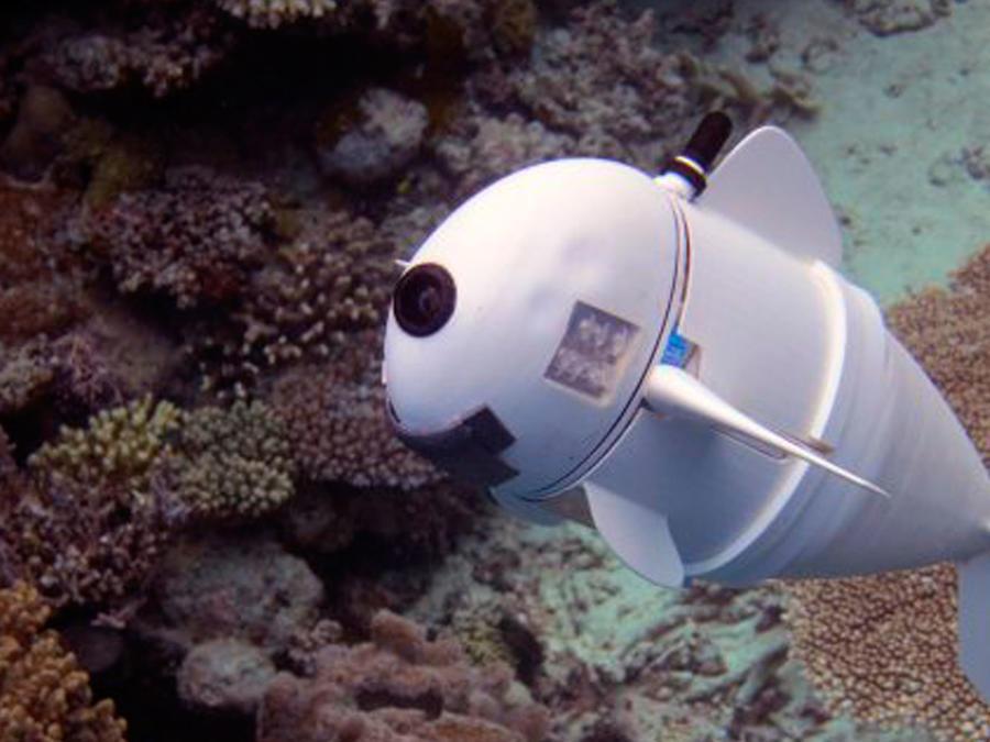 SoFi, el pez robótico del MIT