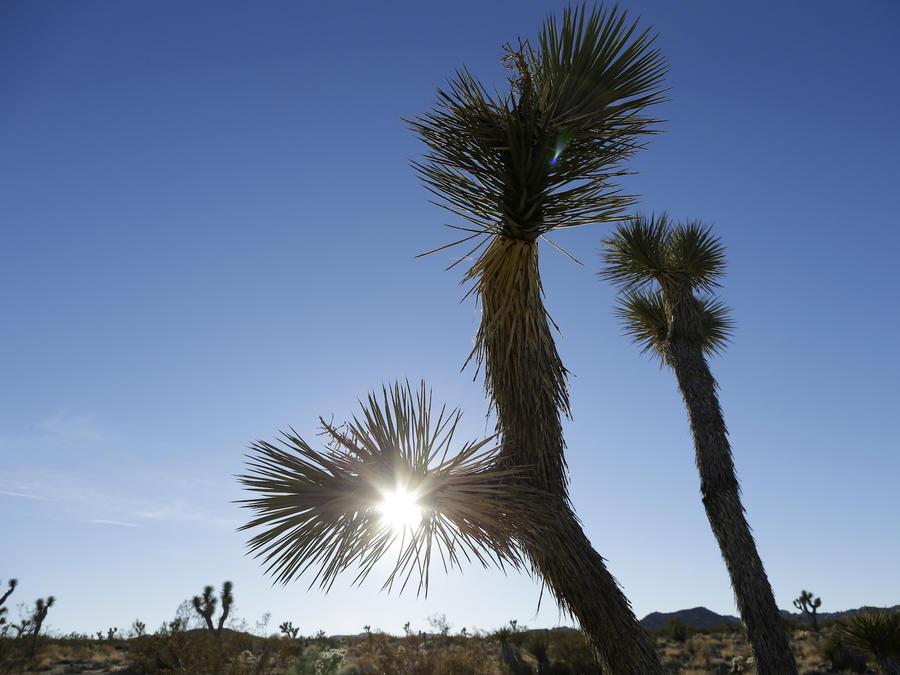 El atardecer en el parque nacional Joshua, California, el 16 de enero de 2013.