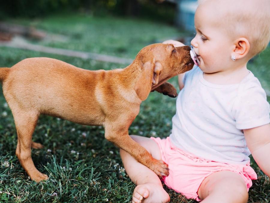 Bebé pequeña jugando con perro