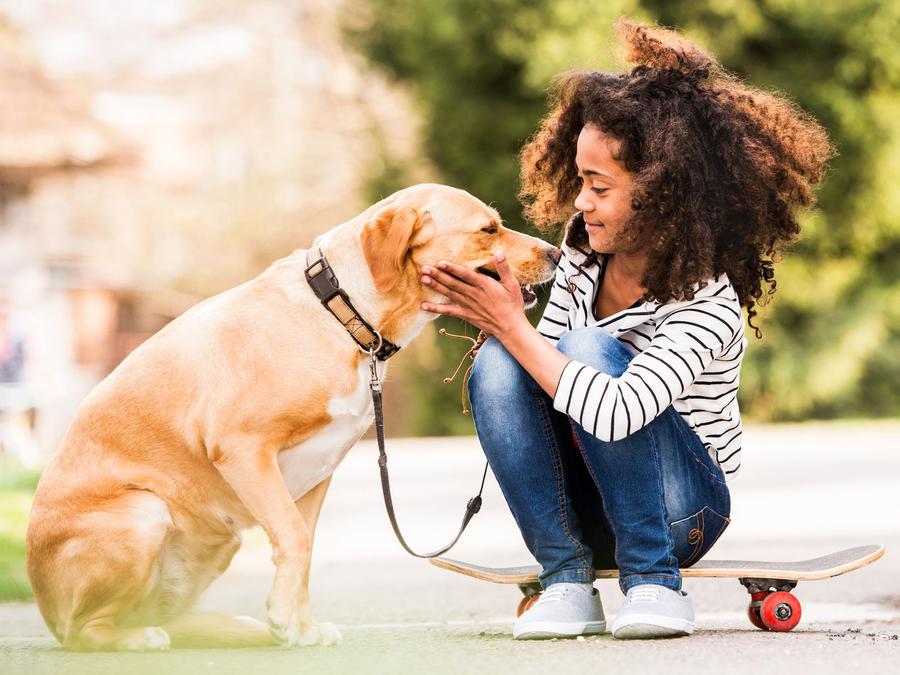 Niña se acerca a un perro