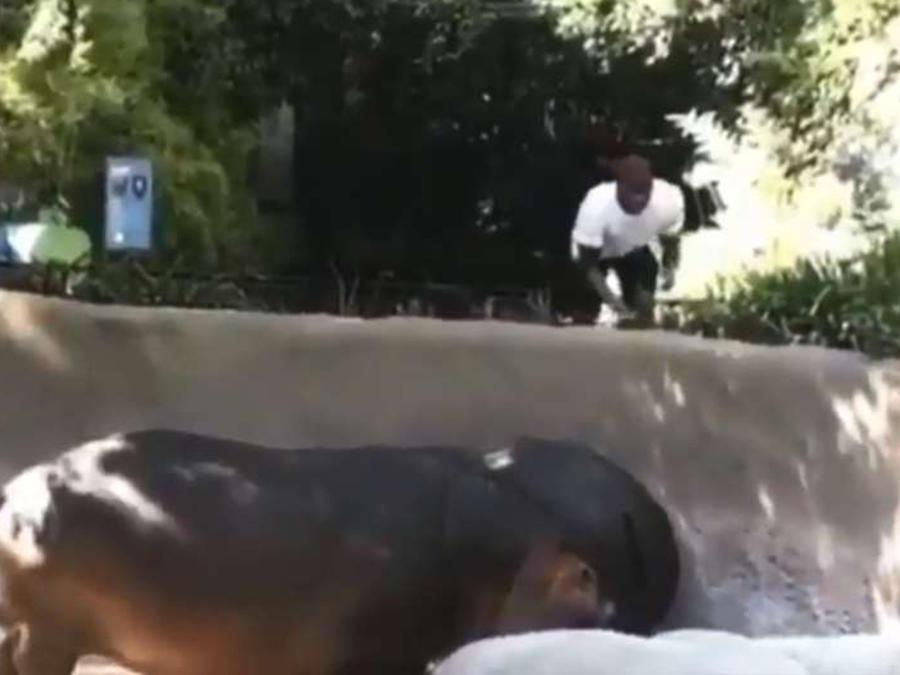 hipopótamo en el zoologico