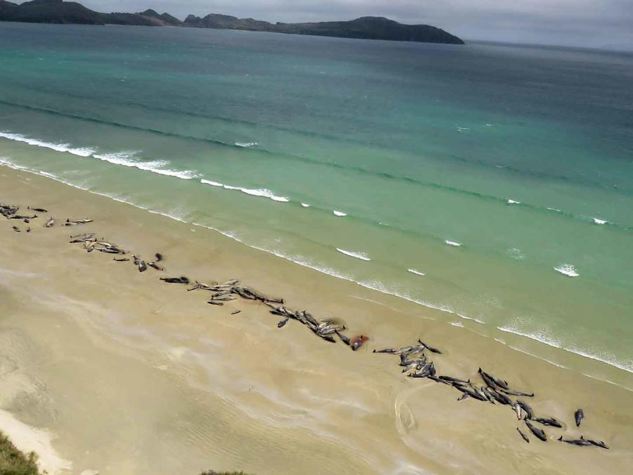 Un excursionista realizó el hallazgo de las ballenas el sábado por la noche.