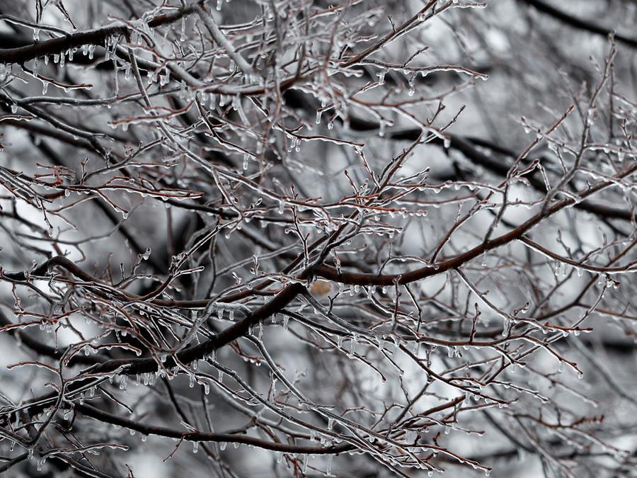Un árbol helado en Michigan debido a tormenta invernal