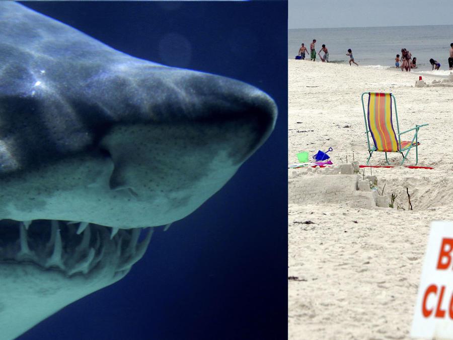 Imágenes de archivo de un tiburón y una playa cerrada por peligro de ataques de estos animales.