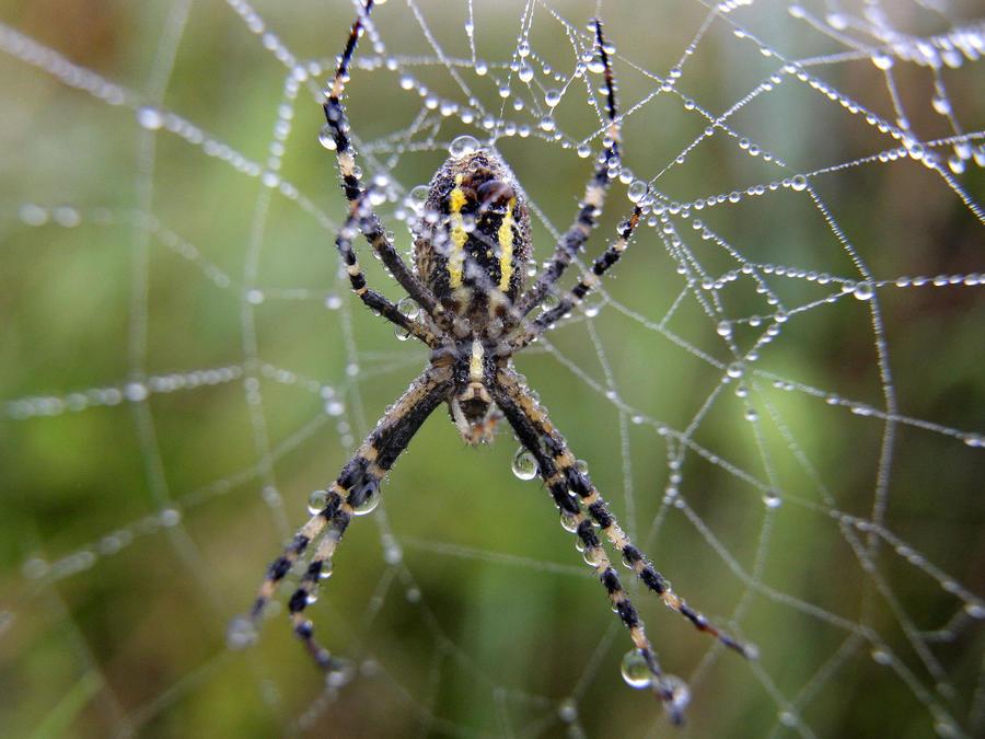 Imagen de archivo de una araña.