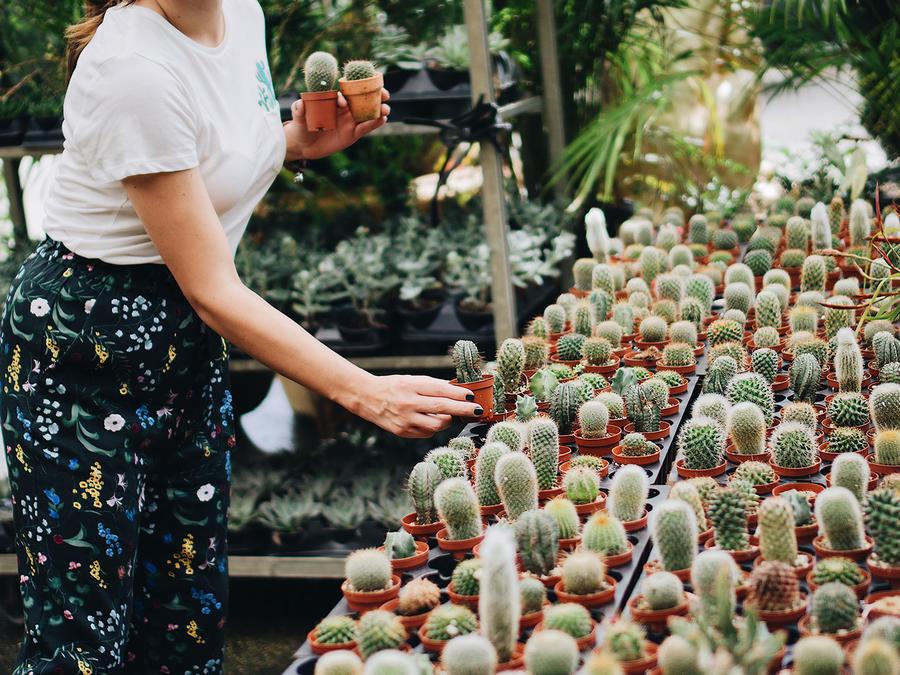 Mujer escogiendo un cactus