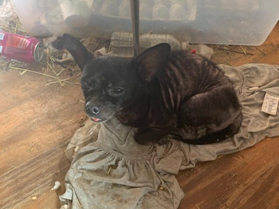 Más de 200 animales fueron encontrados viviendo en condiciones deplorables en una casa de la ciudad de Edgewater, en Florida.