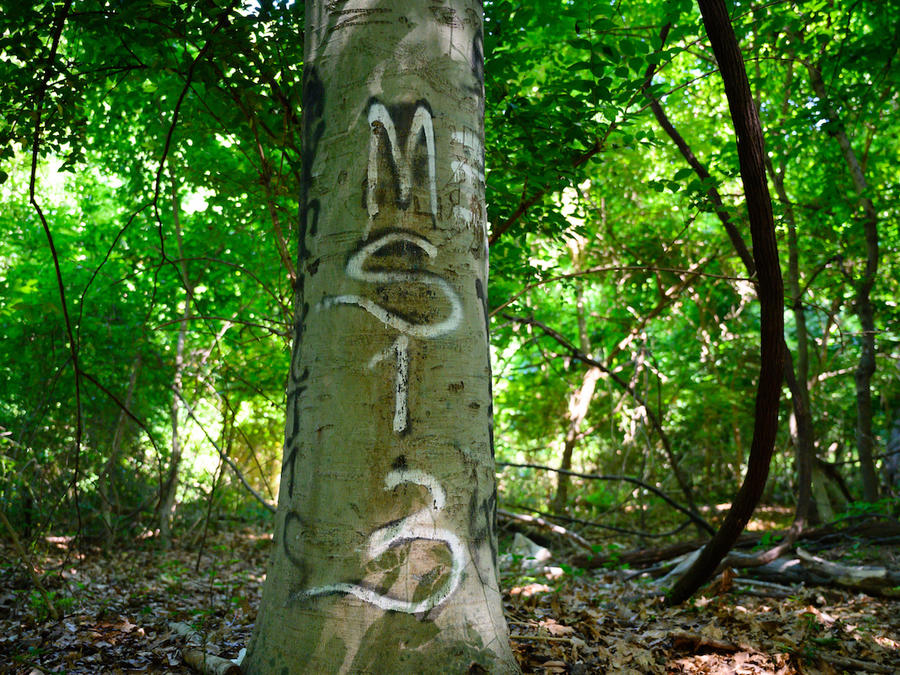 """Un árbol con un grafiti pandillero en una zona de Langley Park (Maryland) que estos grupos conocen como """"el cementerio""""."""