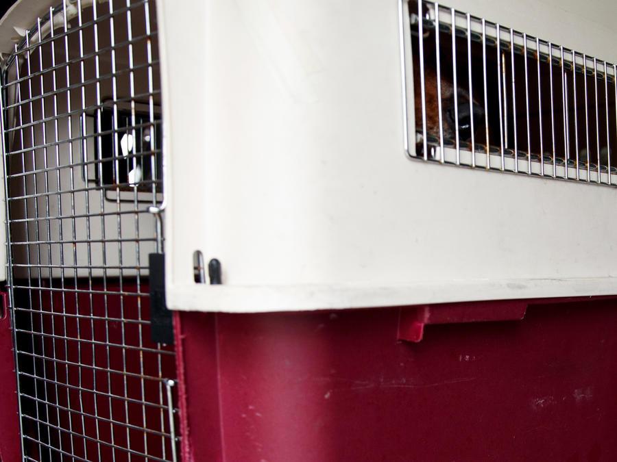 Un animal en una jaula para volar en un avión en una imagen de archivo.