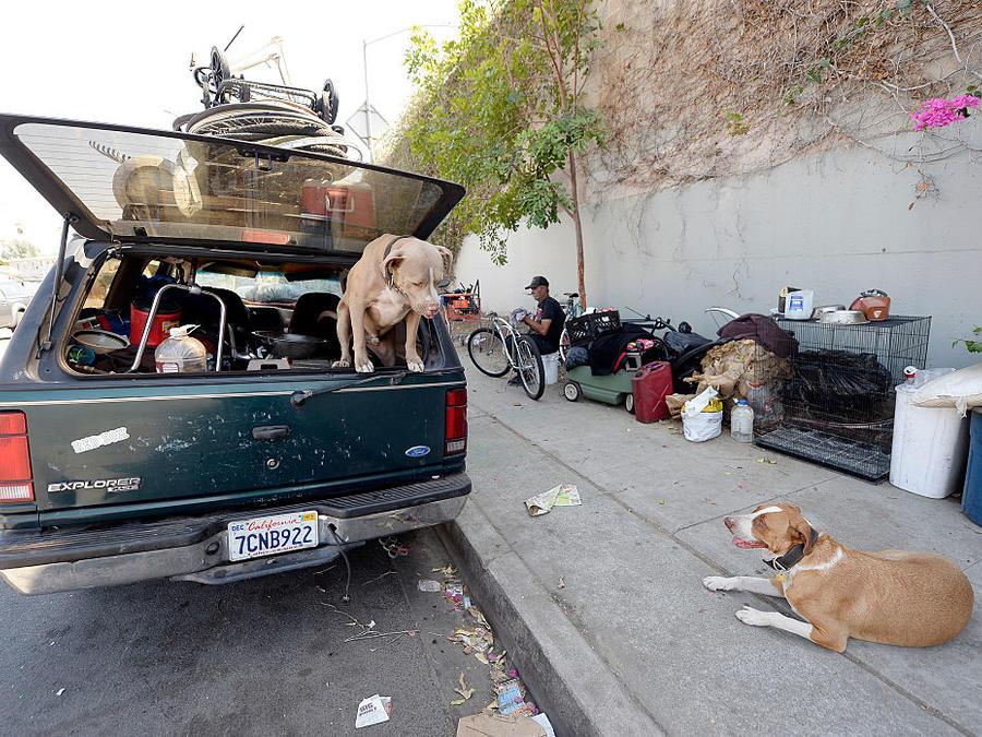 Los dos perros de un hombre sin hogar en Los Ángeles, California, en una foto de archivo.