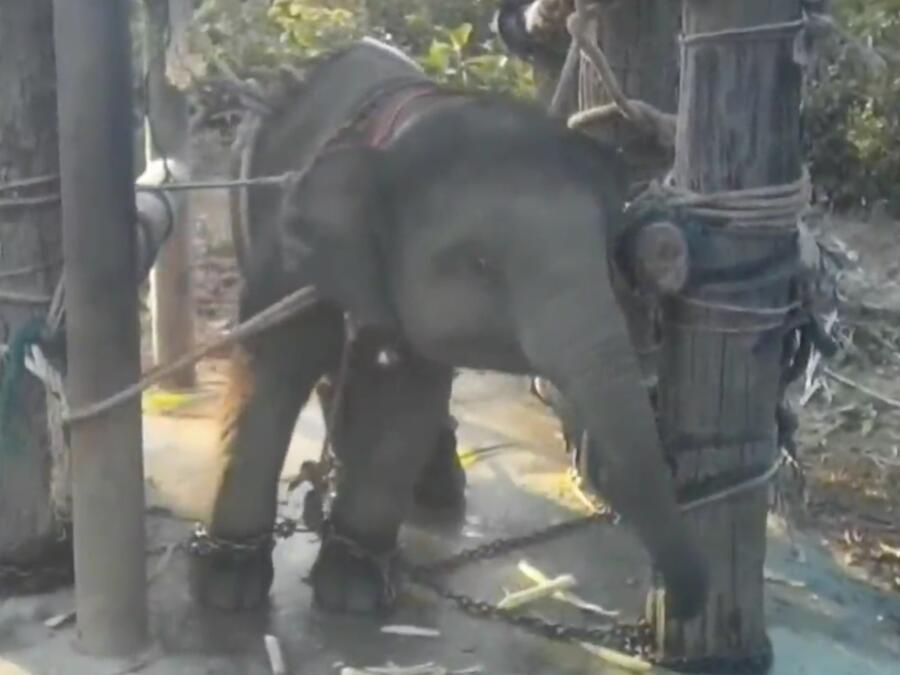 Elefantes Tailandia