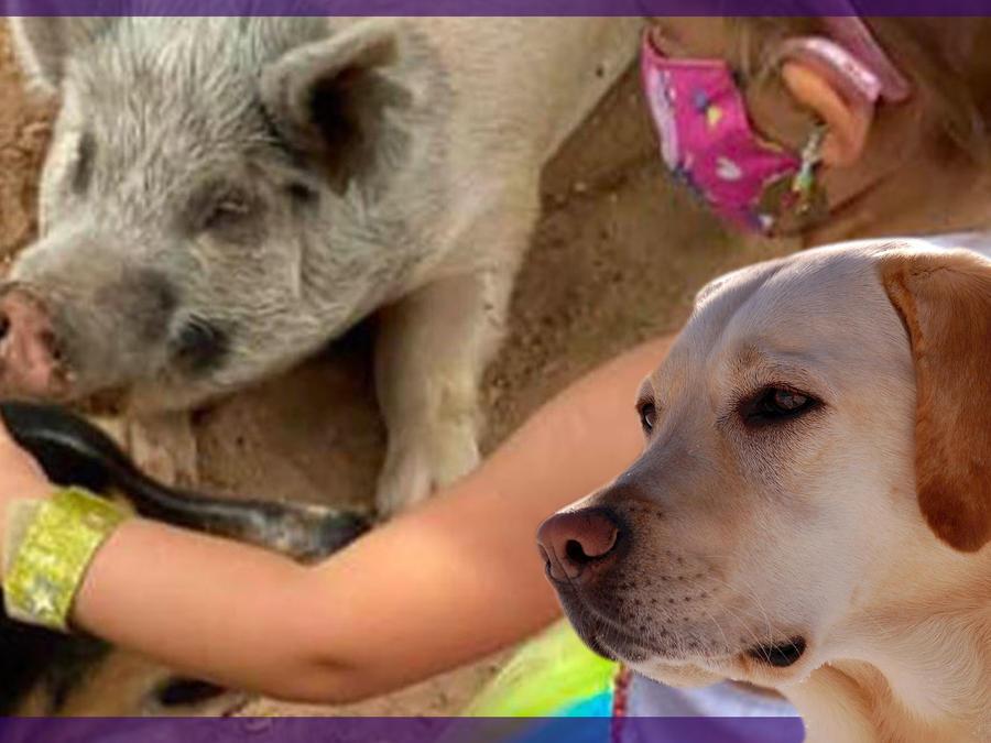 Santuario animales niños con capacidades especiales