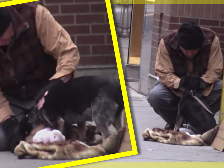 Perrito indigente ayuda