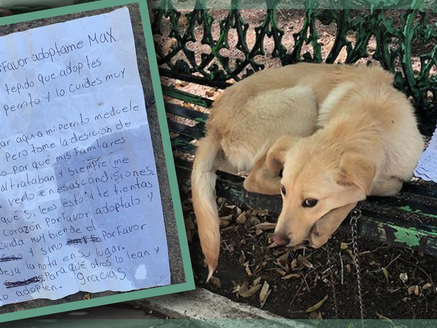 Perrito abandonado Ciudad de méxico