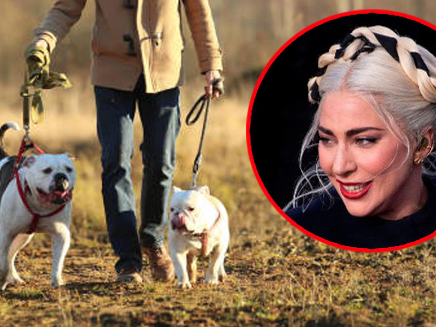 Lady Gaga robo de perros