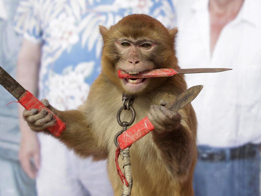 mono cuchillos