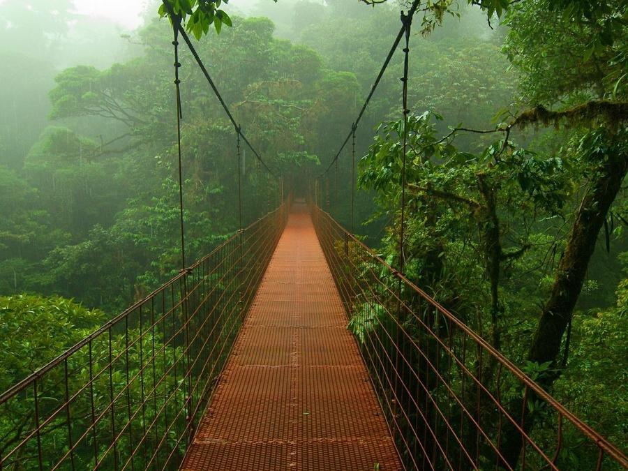 bridge-photo-jungle.jpg