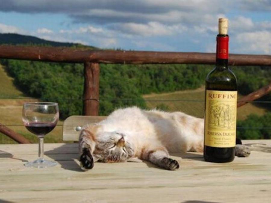Gato dormido en una mesa entre una copa y una botella de vino