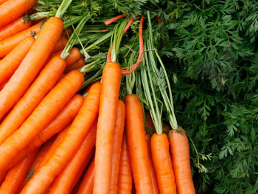 Vista de zanahoria tras ser modificada para cultivo