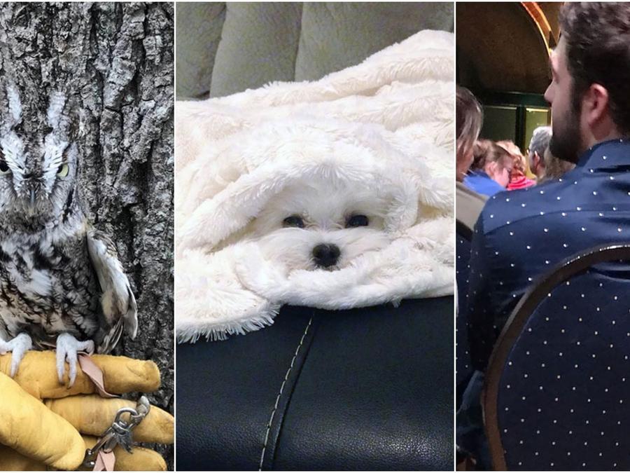 Fotos camuflage