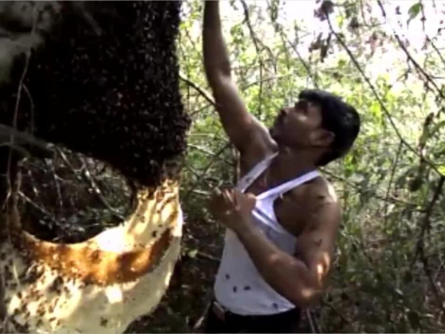 Hombre de abejas viral