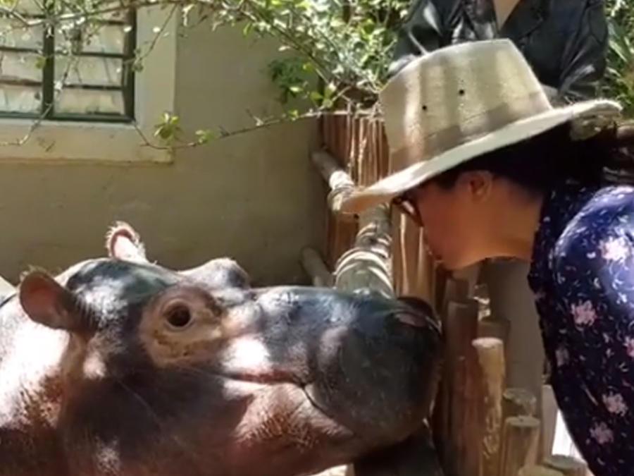 Salma Hayek besó a un hipopótamo y así reaccionó su hija