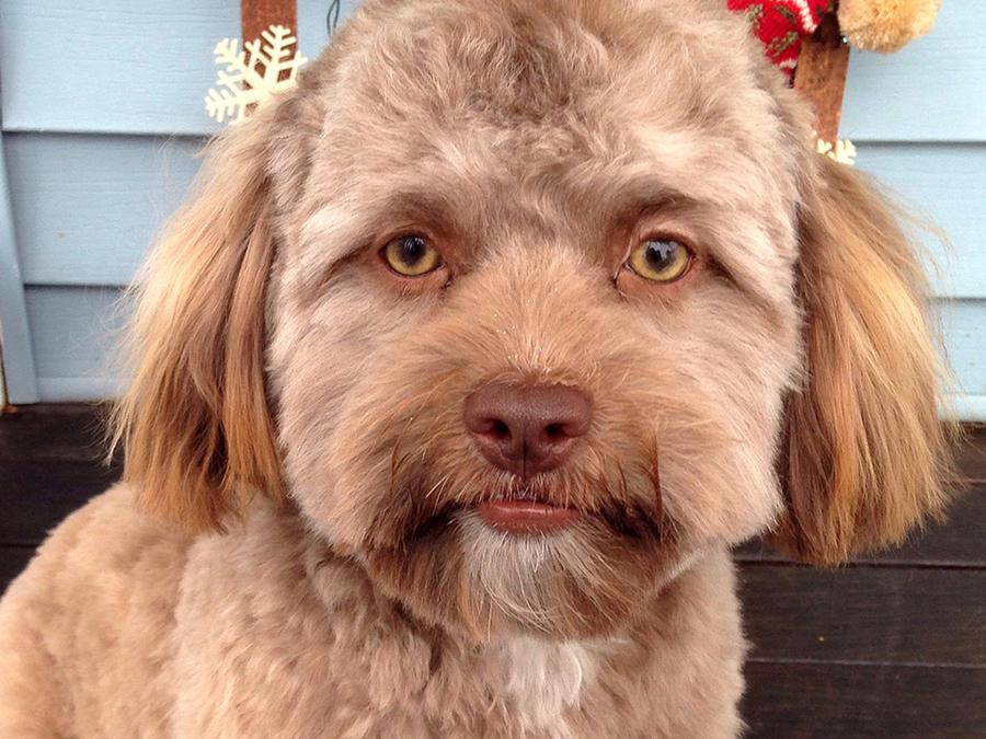 Este perro causa furor por su cara de humano