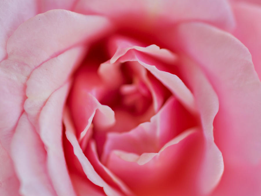 Close-up flor