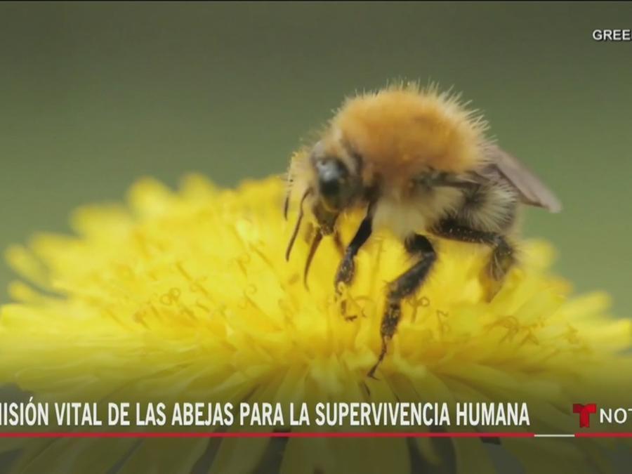 Planeta Tierra   Noticias Telemundo