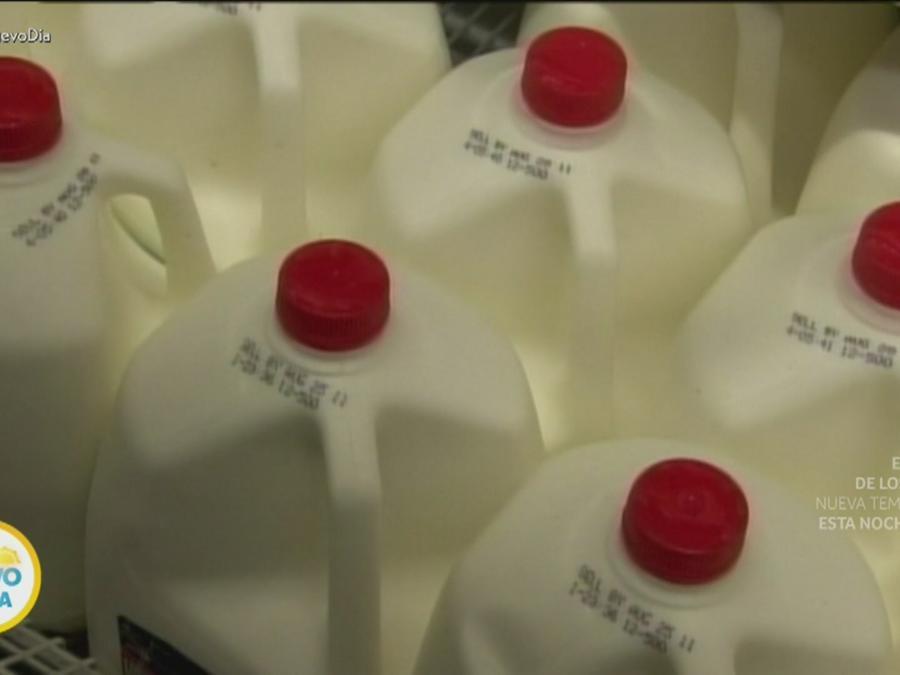 Galones de leche fresca