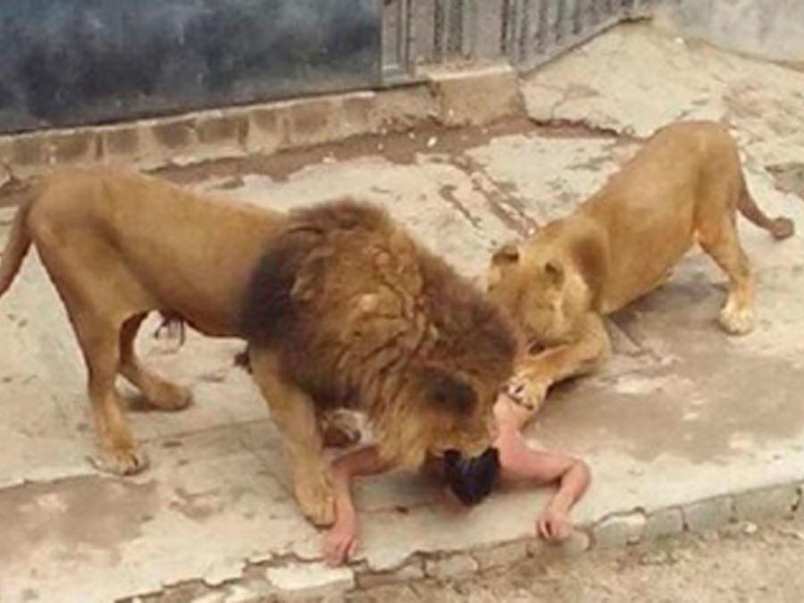 Joven se lanza a la jaula de los leones en un intento de suicidarse