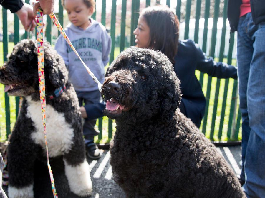 Los perros de la familia presidencial durante la celebración de la Pascua en La Casa Blanca el 28 de Marzo del 2016