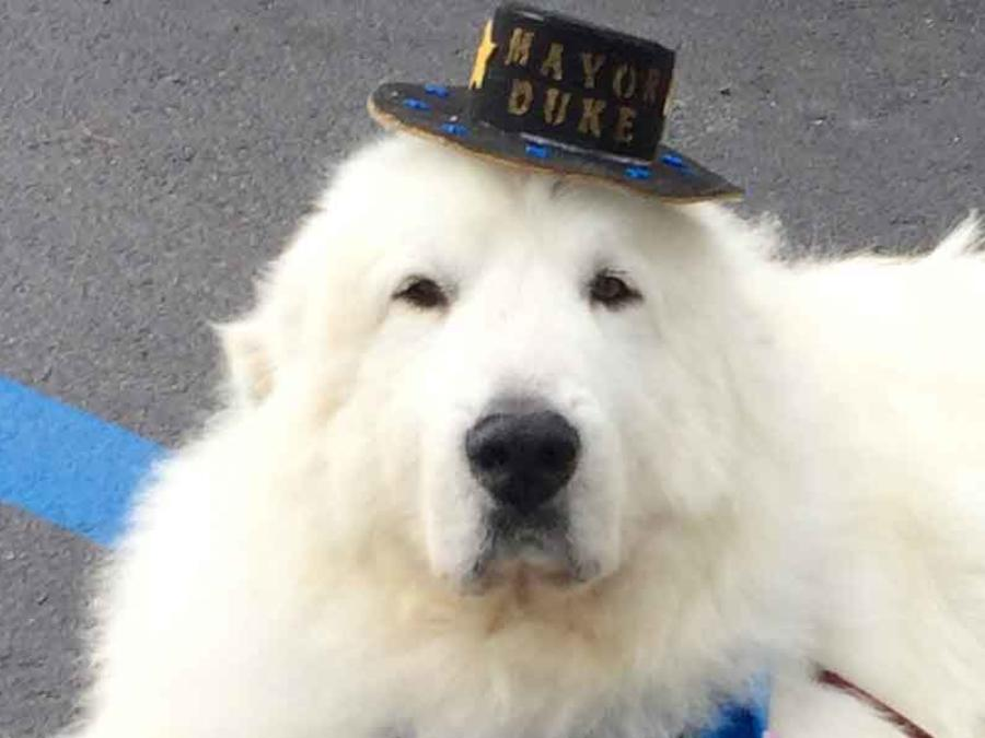 perro alcalde en minesota